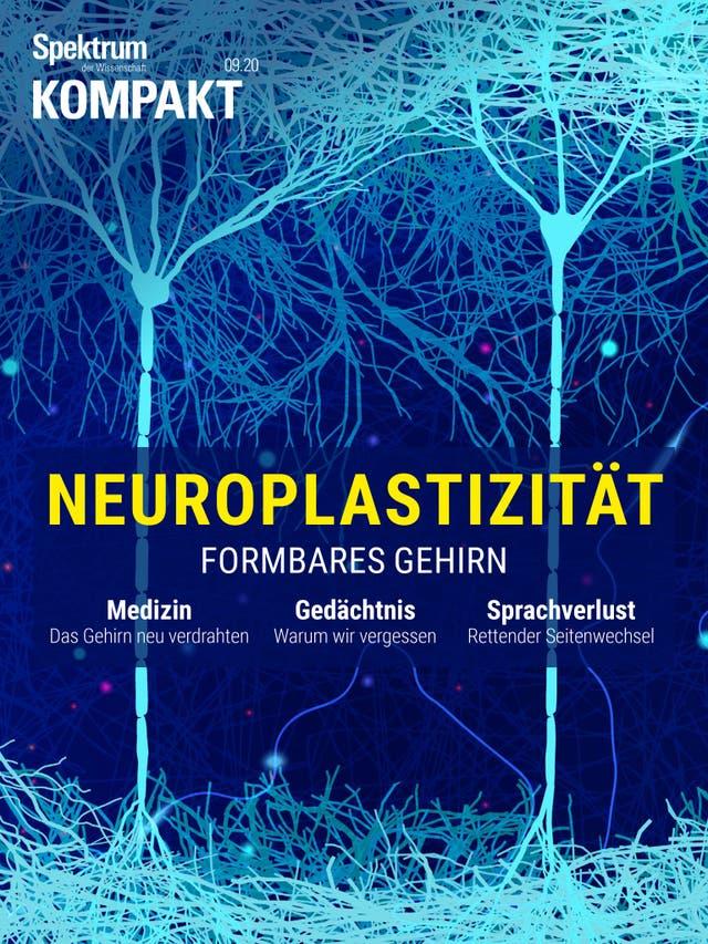 Neuroplastizität - Formbares Gehirn
