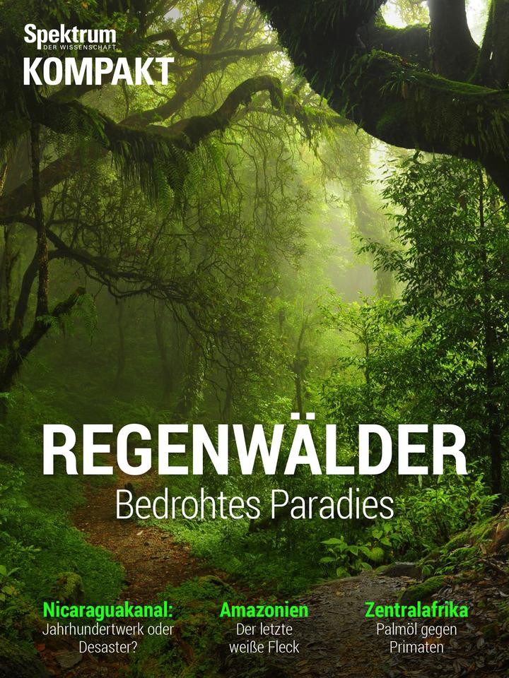 Regenwälder – Bedrohtes Paradies