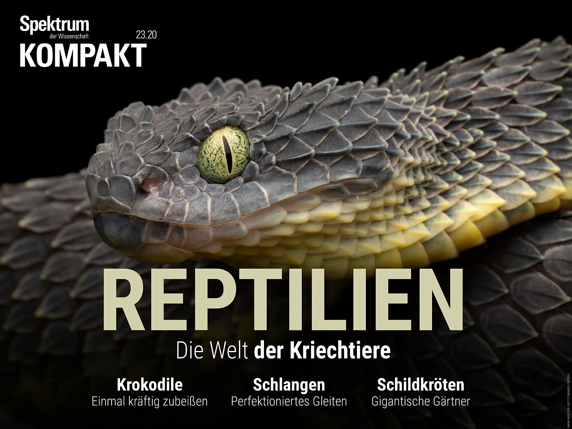 Reptilien - Die Welt der Kriechtiere