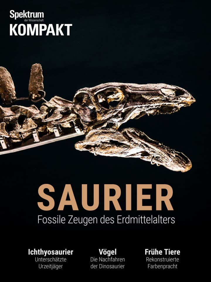 Saurier - Fossile Zeugen des Erdmittelalters