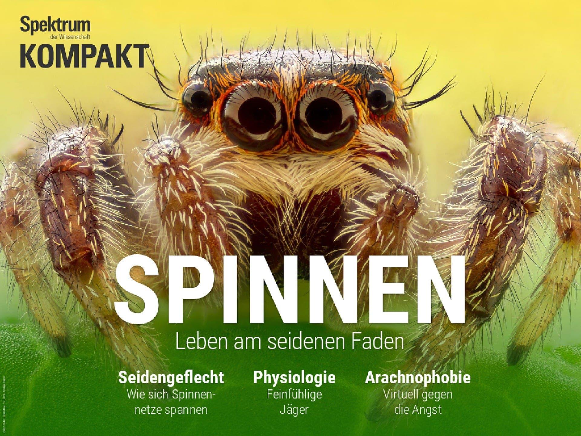 Spinnen - Leben am seidenen Faden