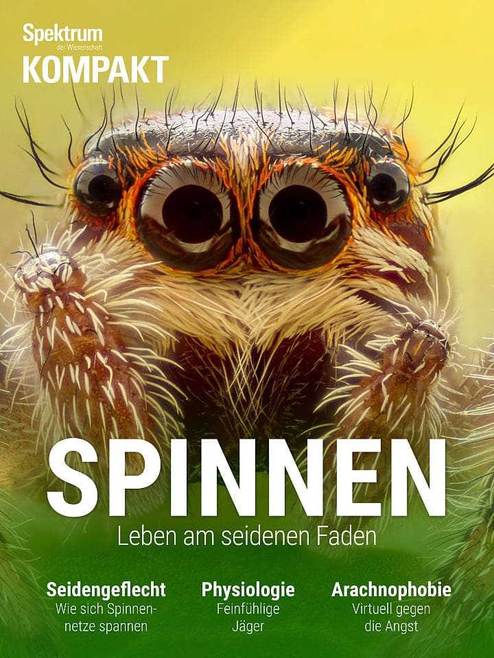 Spektrum Kompakt:  Spinnen – Leben am seidenen Faden