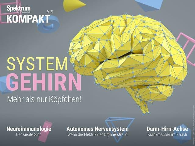 Spektrum Kompakt:  System Gehirn – Mehr als nur Köpfchen!