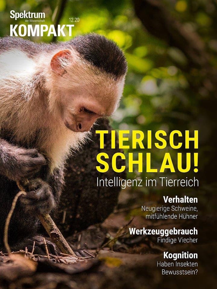 Spektrum Kompakt:  Tierisch schlau! – Intelligenz im Tierreich