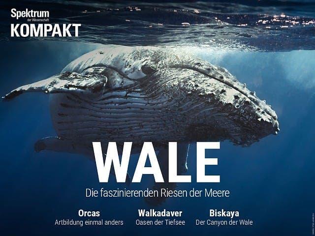 Spektrum Kompakt:  Wale – Die faszinierenden Riesen der Meere