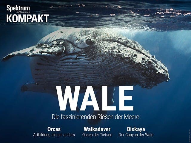 Wale - Die faszinierenden Riesen der Meere