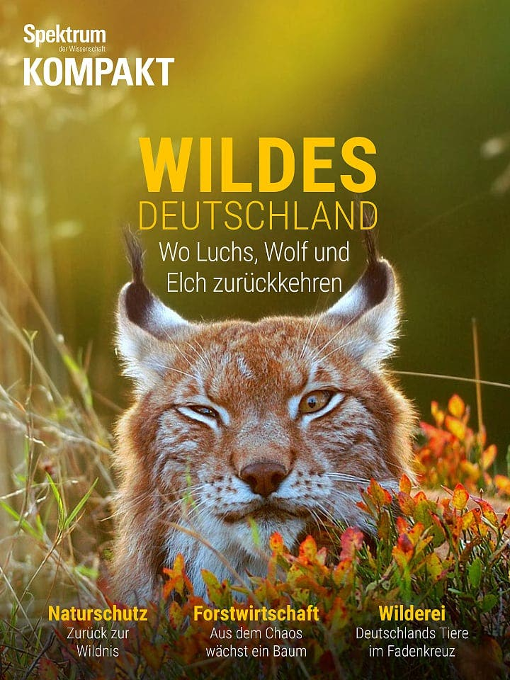Spektrum Kompakt:  Wildes Deutschland – Wo Luchs, Wolf und Elch zurückkehren